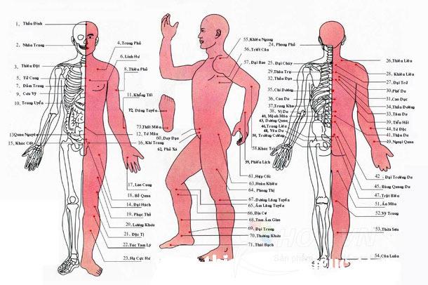 Huyệt vị mà máy massage trị liệu có thể massage