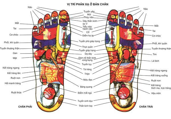 Sơ đồ huyệt đạo bàn chân